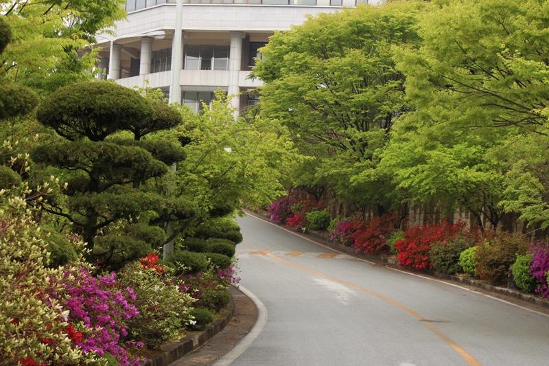 Khuôn viên xanh tại trường Cao đẳng Khoa học Jeonbuk - Jeonbuk Science College