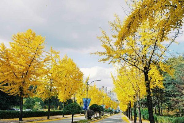 Làm thế nào để được đi du học Hàn Quốc?